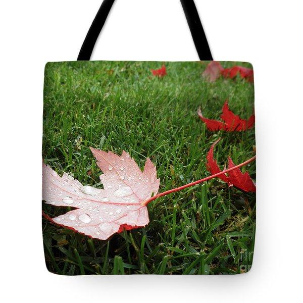 Maple Leaf In Canada Tote Bag