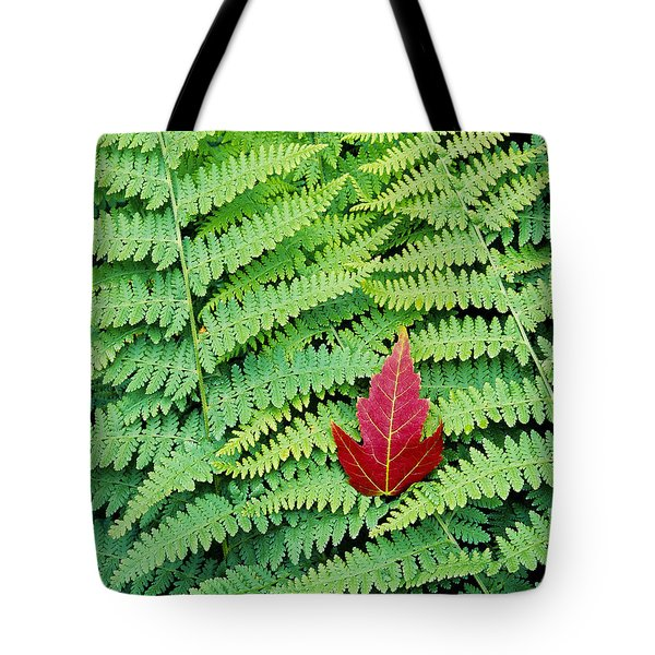 Tote Bag featuring the photograph Maple Leaf On Ferns by Alan L Graham