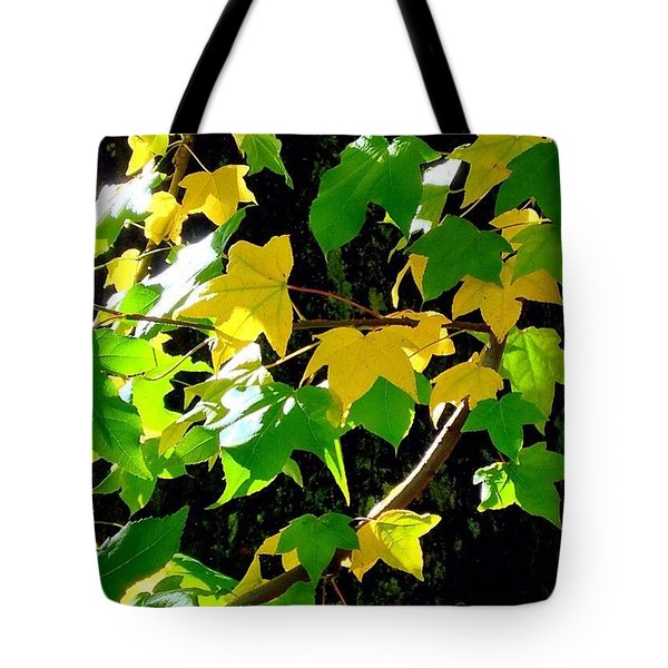 Maple Leaves In Sunlight Tote Bag
