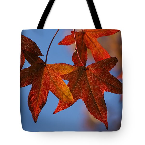 Maple Leaves In The Fall Tote Bag by Stephen Anderson