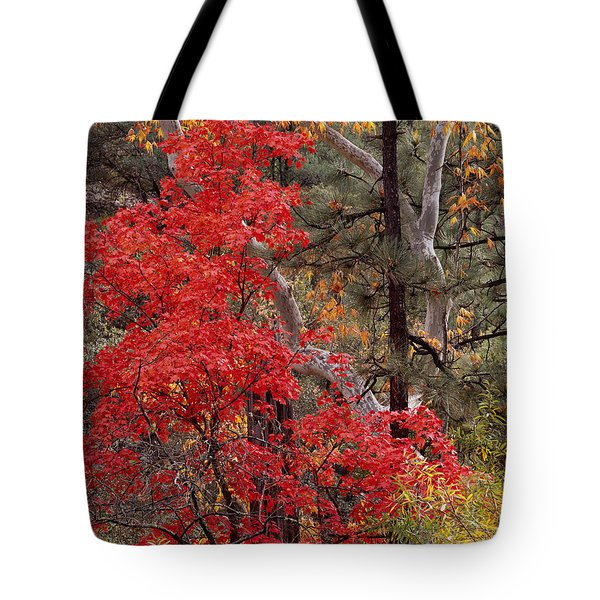 Maple Sycamore Pine-h Tote Bag