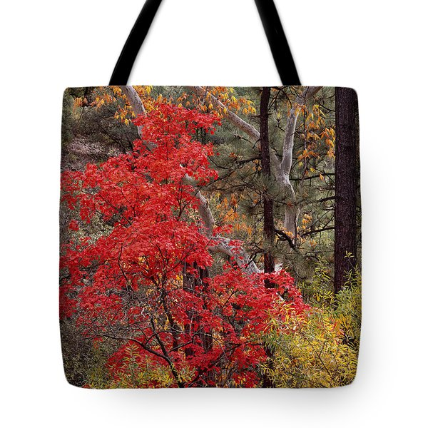 Maple Sycamore Pine Tote Bag