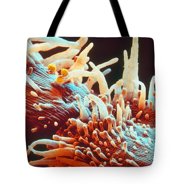 Marigold Petal Sem Tote Bag by Eye Of Science