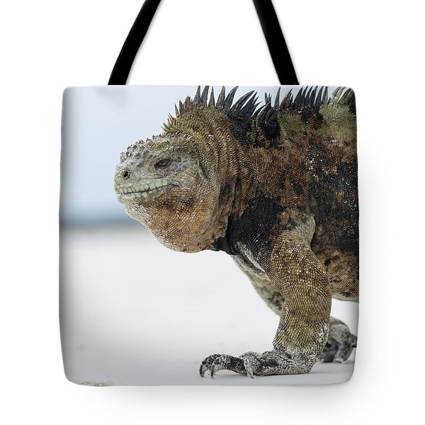 Marine Iguana Male Turtle Bay Santa Tote Bag