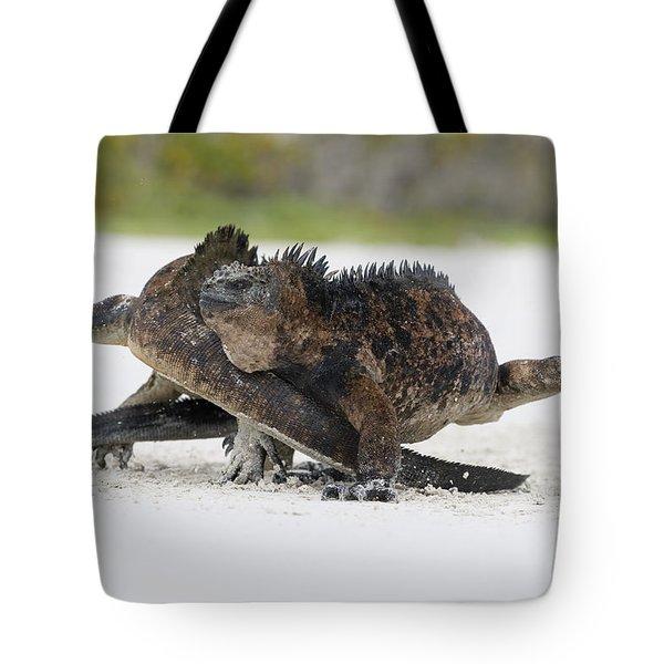 Marine Iguana Males Fighting Turtle Bay Tote Bag