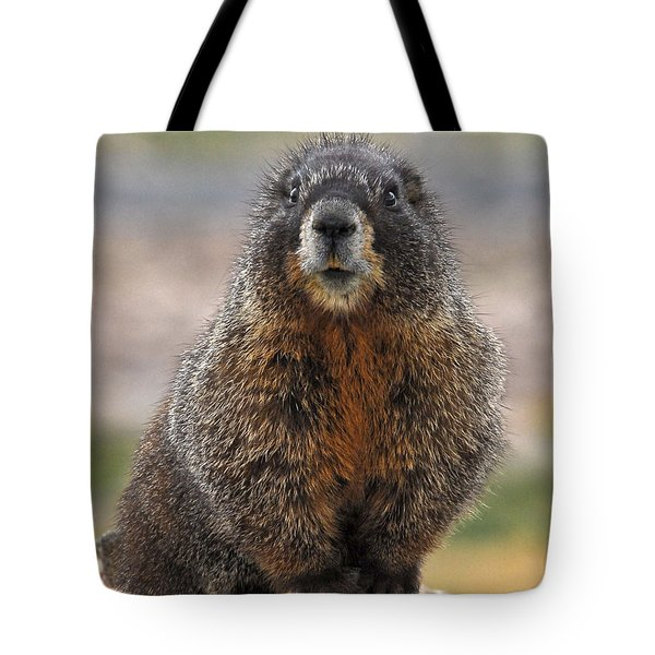 Tote Bag featuring the photograph Marmot by Mae Wertz
