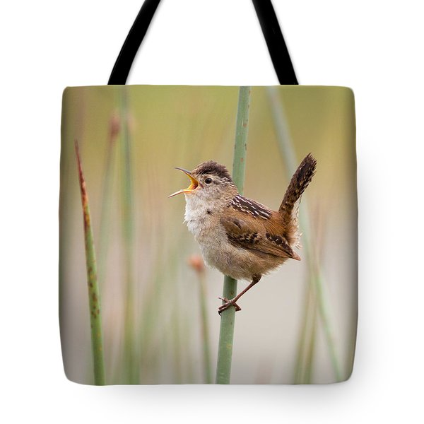 Marsh Wren Tote Bag by Doug Herr