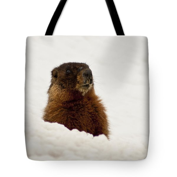 Marty The Marmot Tote Bag by Daniel Hebard