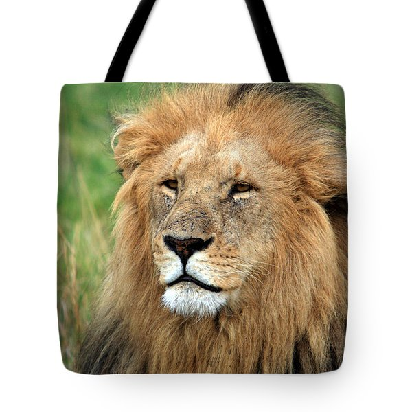 Masai Mara Lion Portrait    Tote Bag by Aidan Moran