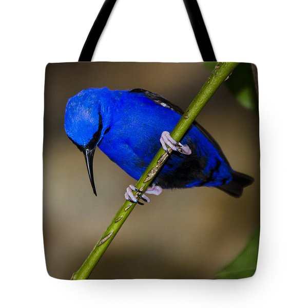 Masked Blue Bird Tote Bag by Penny Lisowski