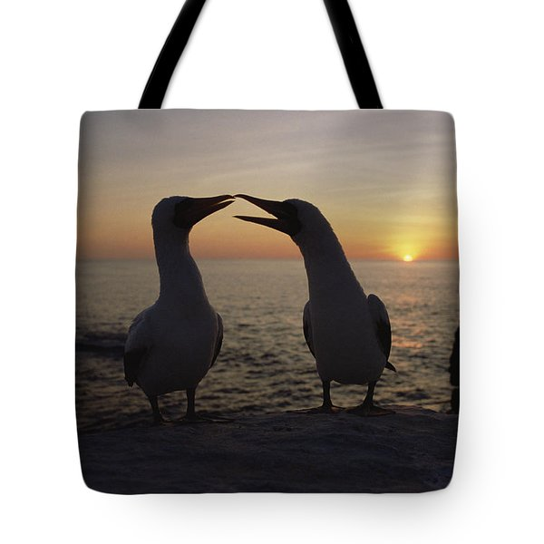 Masked Booby Couple Courting Galapagos Tote Bag by Konrad Wothe