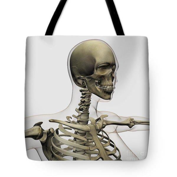 Medical Illustration Of A Womans Skull Tote Bag by Stocktrek Images