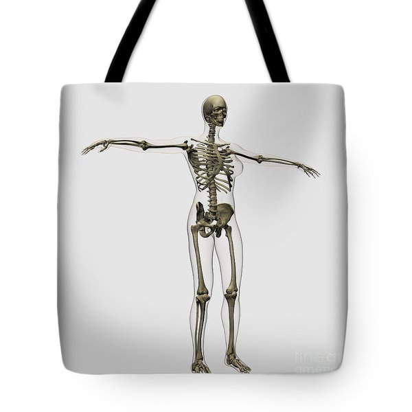 Medical Illustration Of Full Female Tote Bag by Stocktrek Images