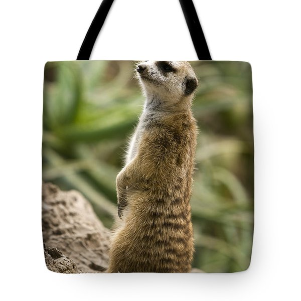 Tote Bag featuring the photograph Meerkat Mongoose Portrait by David Millenheft