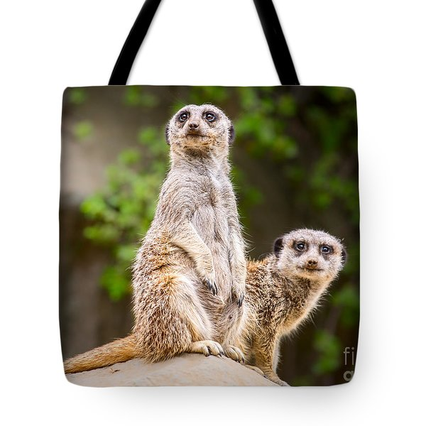 Meerkat Pair Tote Bag
