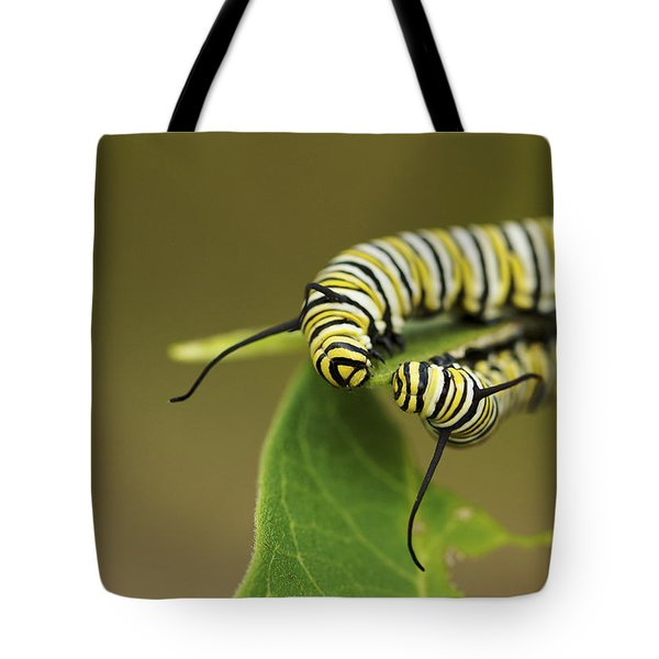 Meeting In The Middle - Monarch Caterpillars Tote Bag by Jane Eleanor Nicholas