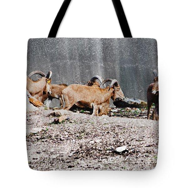 Meeting Of Barbary Sheep Tote Bag