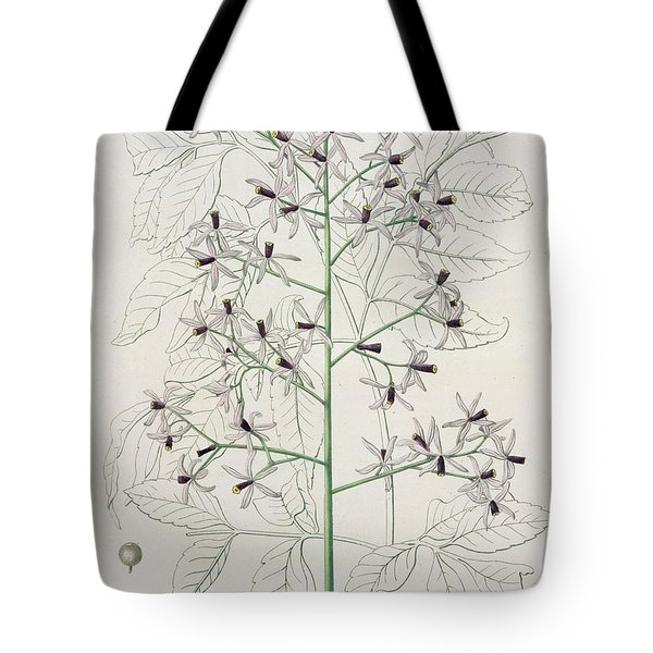 Melia Azedarach From 'phytographie Medicale' By Joseph Roques Tote Bag by L F J Hoquart