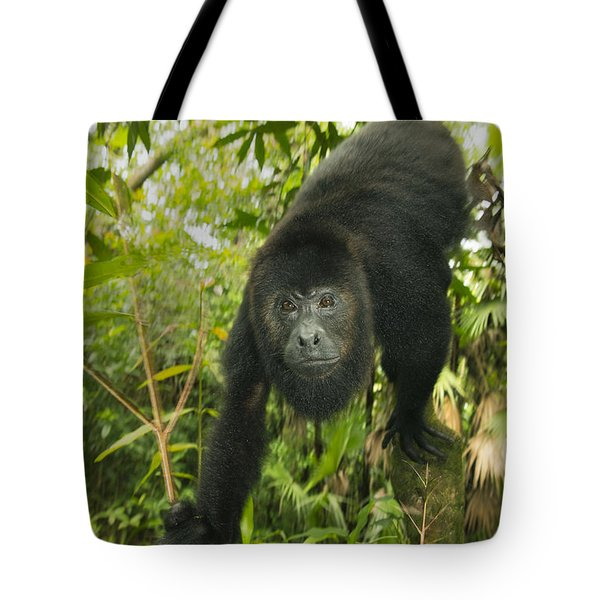 Tote Bag featuring the photograph Mexican Black Howler Monkey Belize by Kevin Schafer