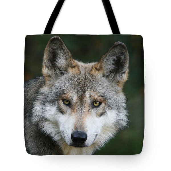 Mexican Wolf #3 Tote Bag