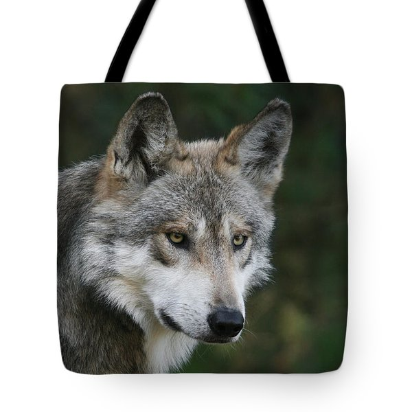 Mexican Wolf #4 Tote Bag