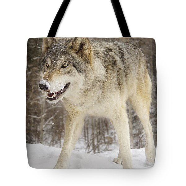 Micah  Tote Bag by Brian Cross