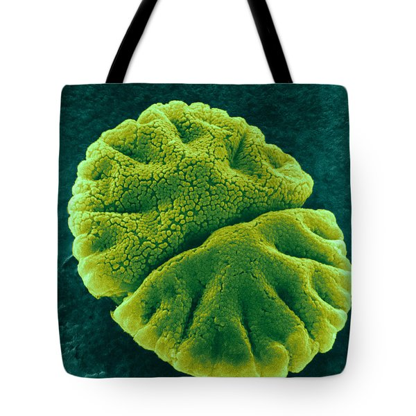 Tote Bag featuring the photograph Micrasterias Angulosa, Algae, Sem by Science Source