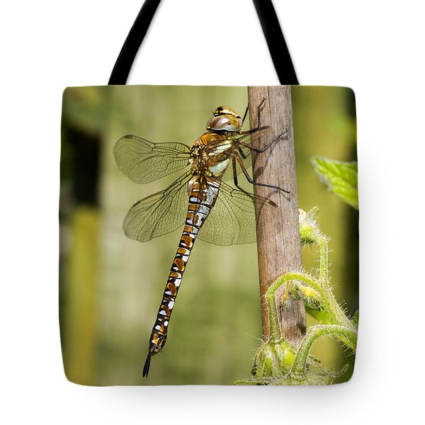 Migrant Hawker Dragonfly Tote Bag