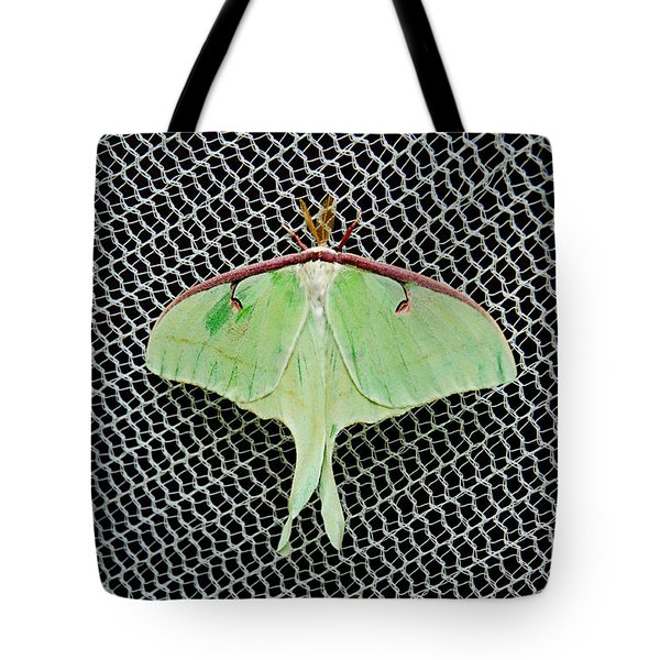 Mint Green Luna Moth Tote Bag by Andee Design