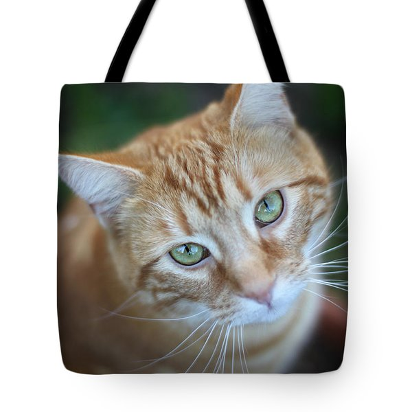 Miss Lucy Mcgillicuddy Tote Bag by Melanie Lankford Photography