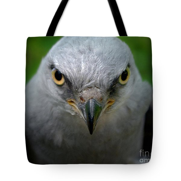 Mississippi Kite Stare Tote Bag