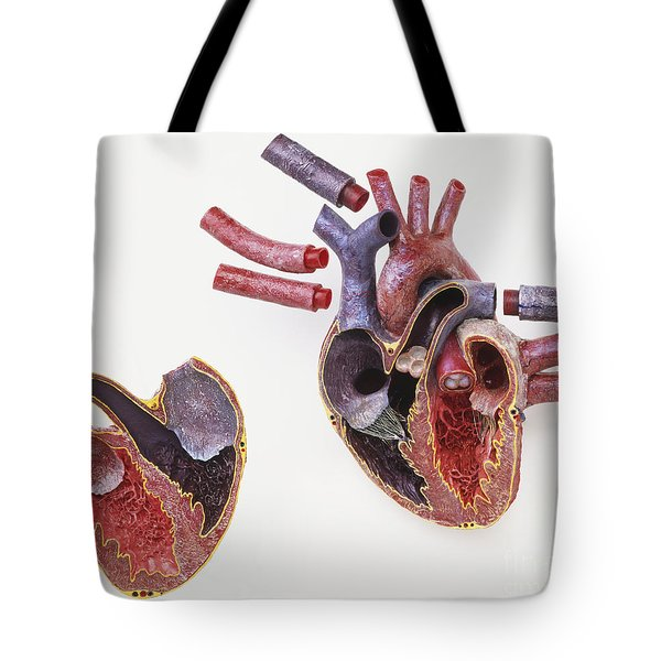 Model Of Human Heart Tote Bag