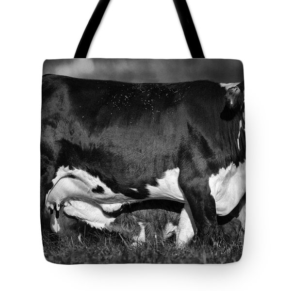 Momma Cow Tote Bag by Patrick M Lynch