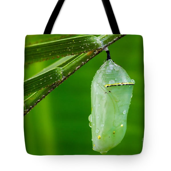 Monarch Butterfly Chrysalis Tote Bag by Dawna  Moore Photography