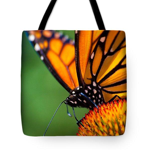 Monarch Butterfly Headshot Tote Bag by Bob Orsillo