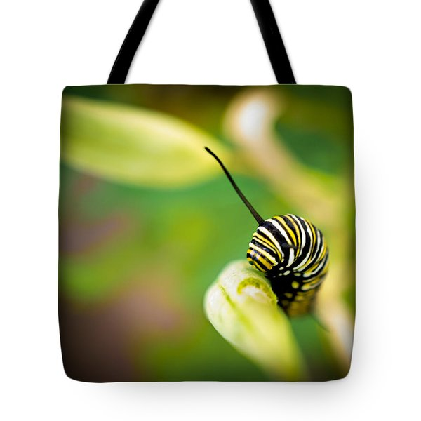 Monarch Offspring Tote Bag