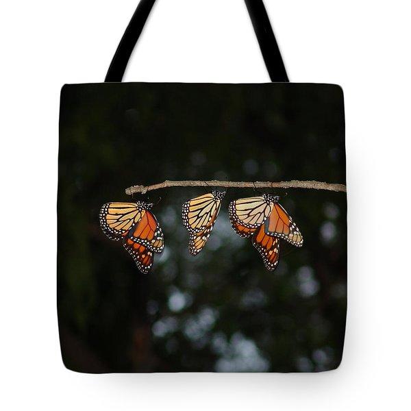 Monarch Trio Tote Bag by Shelly Gunderson