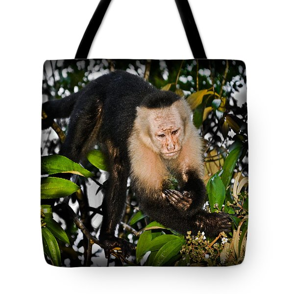 Monkey Business  Tote Bag by Gary Keesler