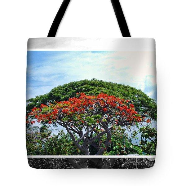 Monkey Pod Trees - Kona Hawaii Tote Bag