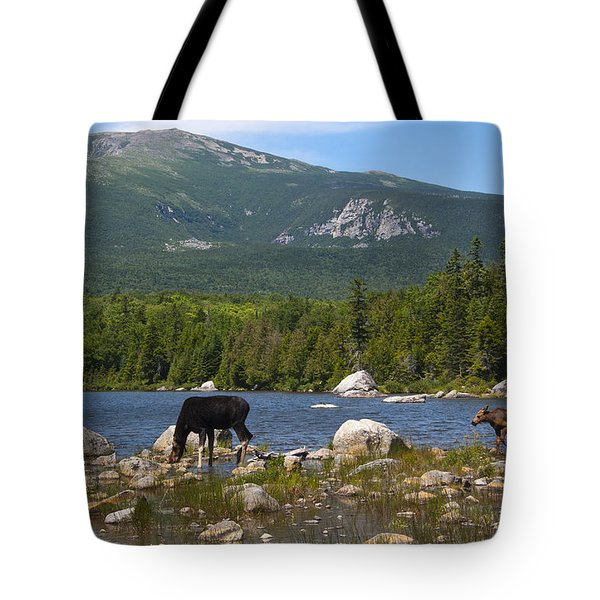 Moose Baxter State Park Maine Tote Bag
