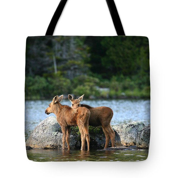 Moose Calves In Maine Tote Bag