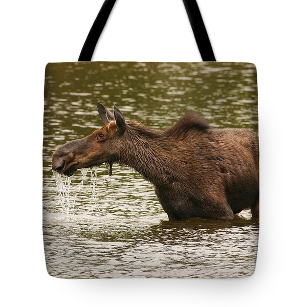 Moose In The Wilderness Tote Bag
