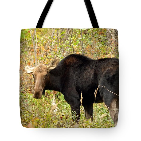 Tote Bag featuring the photograph Moose by James Peterson