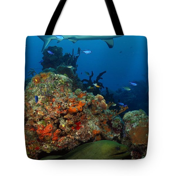 Moray Reef Tote Bag by Carey Chen