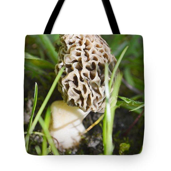 Morchella Esculenta Tote Bag by Felicia Tica