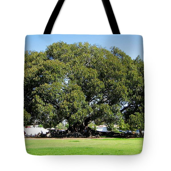 Moreton Fig Tree In Santa Barbara Tote Bag