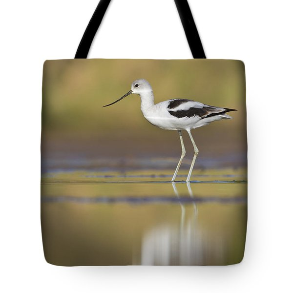 Tote Bag featuring the photograph Morning Avocet by Bryan Keil