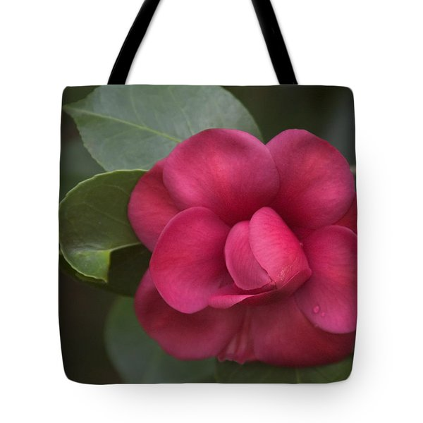 Tote Bag featuring the photograph Morning Camellia by Penny Lisowski
