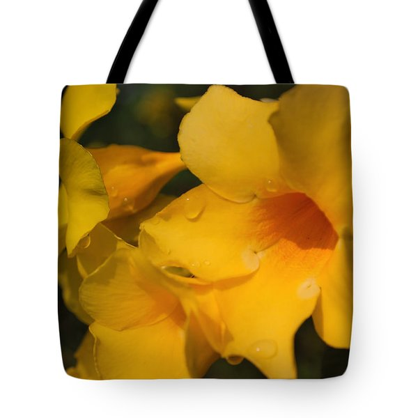 Tote Bag featuring the photograph Morning  Delight by Miguel Winterpacht