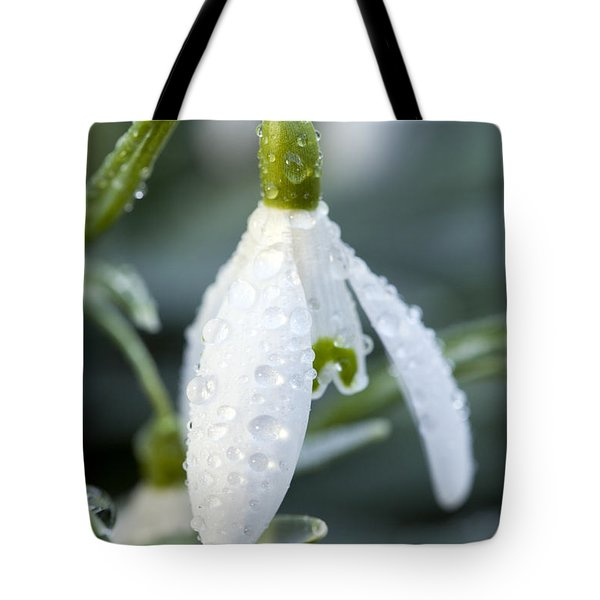 Morning Dew On Snowdrop Tote Bag